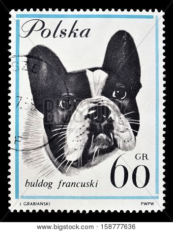 POLAND - CIRCA 1963 : Cancelled postage stamp printed by Poland, that shows French bulldog.