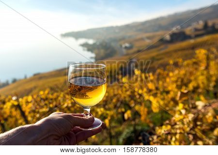 Glass of white wine in the hand against autumnal vineyards in Lavaux region. Geneva lake is on background. Switzerland