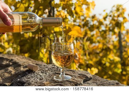 Pouring white wine into the glass. The glass is on the stone wall. Autumnal vineyard in Lavaux region, Switzerland.