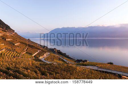 Sunset the autumnal vineyard terraces, lake Leman and Alps Mountains. Region Lavaux, Switzerland