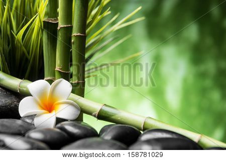 spa concept with zen basalt stones bamboo and Frangipani