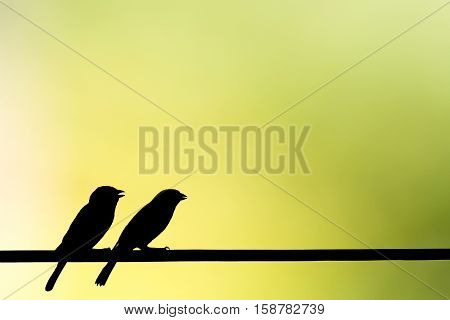 silhouette House Sparrow on natural blur background