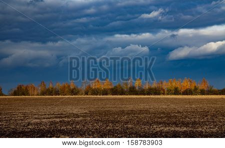 Trees in autumn lit by the sun on a background of a stormy sky