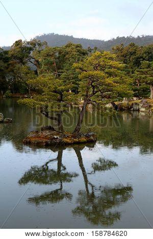 Tree refelcting in lake at Kinkaku-ji Temple in Kyoto Japan