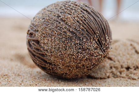 Brown coconut on the beach near sea