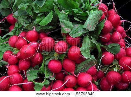 Fresh radishes in market, in Birmingham city center