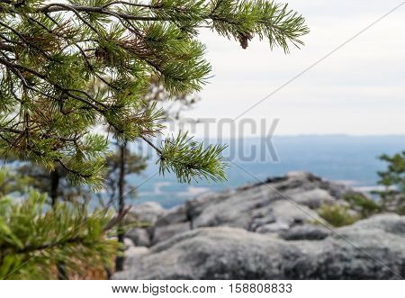 Pine trees in focus and mountain terrain in blurred background