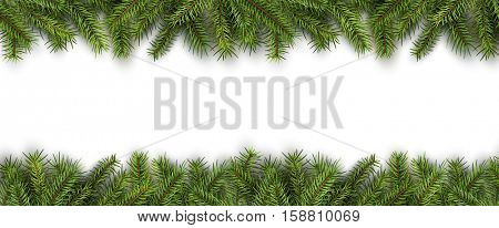 Christmas background green pine tree branches on white, realistic vector illustration.