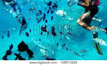 Snorkeling in the Red Sea near coral reefs