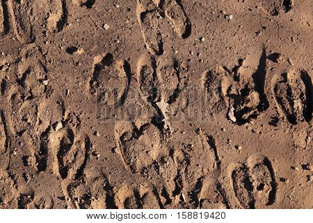 The impression of hoof prints left by a flock of sheep in soft mud on a track.