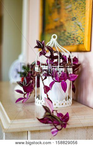 The nice purple Flower in the Livingroom