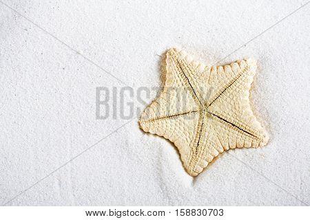 deepwater rare starfish in white beach sand, shallow dof