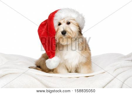 Cute reddish Bichon Havanese puppy dog in a Santa hat is sitting on a white bedspread. Isolated on a white background