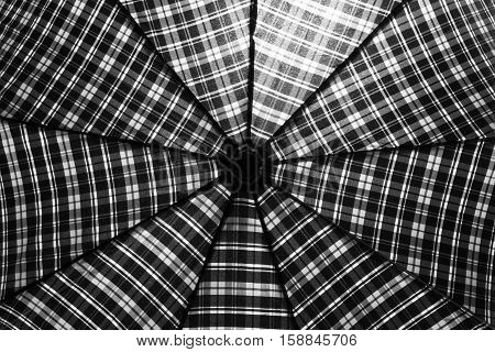 Male umbrella in expanded form. Outwardly resembles a spider web.
