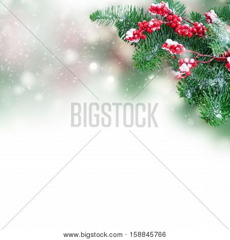 twig with red berries and green evergreen tree twig over white background
