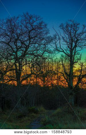 A colorful sky behind oak woods with a trail going into it