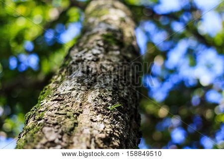 The Trees in the forest are abundant