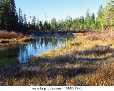 Trees reflecting in Fall River on an October morning in Central Oregon.