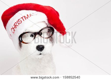 horizontal close up head shot of a toy white poodle wearing glasses and christmas hat with space for copy.