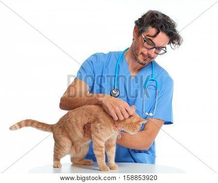 Veterinarian doctor with cat.