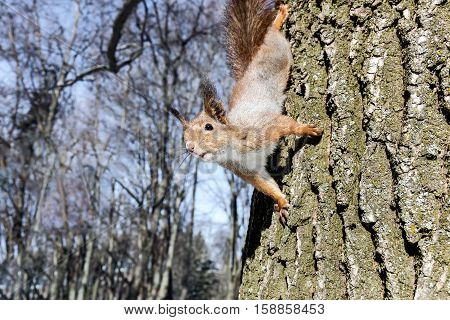 Curious Squirrel Sitting On Tree Trunk In Forest