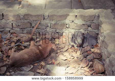 Stray dogs Sad puppy on the street