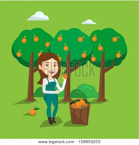 Gardener holding an orange on the background of orange trees. Female caucasian gardener collecting oranges. Gardener standing near basket with oranges. Vector flat design illustration. Square layout.
