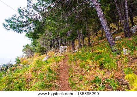 Landscape with trees and stones. Beautiful picture of mediterranean forest. Travel Photography.