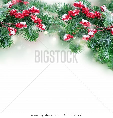 twig with red berries and evergreen fir tree twig over white background