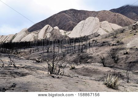 Desolate charcoaled landscape with burnt chaparral plants and the sandstone Mormon Rocks beyond taken in Cajon, CA