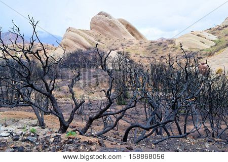 Charcoaled landscape with burnt chaparral plants caused from a wildfire and the sandstone Mormon Rocks beyond taken in Cajon, CA