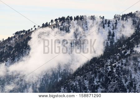 Mountain range with a Pine Forest surrounded with snow and fog taken in Mt Baldy, CA