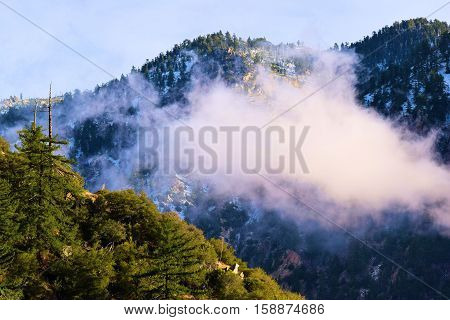 Mountain ridges with a Pine Forest and snow surrounded by fog and clouds taken in Mt Baldy, CA