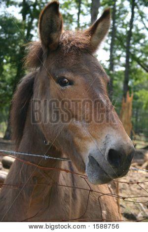 Donkey Too