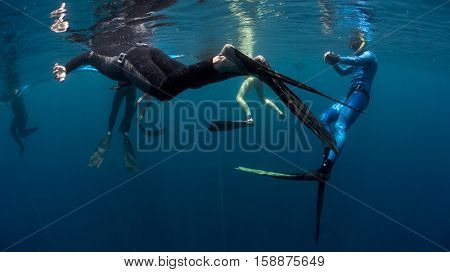 Free divers training in the tropical sea