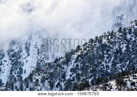 Mountain ridges with Pine Forest and snow during the winter season surrounded by clouds taken in Mt Baldy, CA