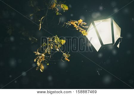 Oak tree branches and falling snow in light of lamppost dark background