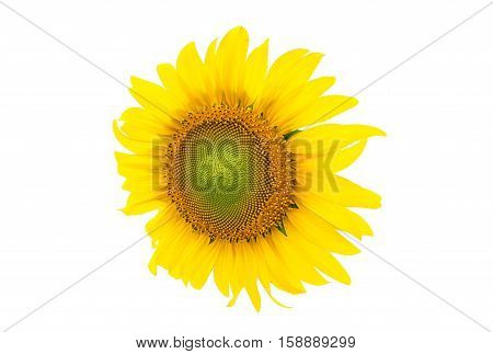 agriculture background beautiful beauty bloom blooming blossom blue botanical bright cheerful cheery circle clear closeup color colorful country environment farm field flora floral florist flower garden gardening green leaf macro meadow natural nature ora