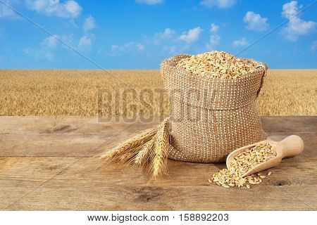 wheat grains in sack. Ears of wheat and wheat grains in bag on table on wheat field background. Agriculture and harvest concept. Gold wheat field and blue sky. Harvest with copy space area for a text