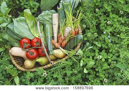 Closeup elevated view of fresh vegetables in basket surrounded by clover