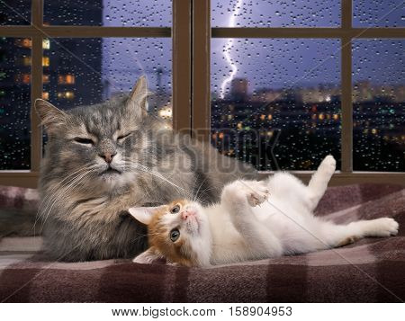 Cat and kitten resting on the window. Outside night city storm lightning. Concept - quiet in the house security reliability