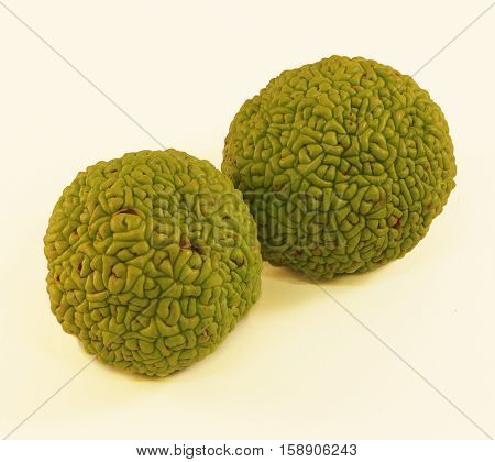 Osage Orange (Maclura) - Also called Hedge Apple.  These trees are planted to provide a natural wind barrier.  The fruit which is largely inedible is attractive, unique, and fragrant is scent.