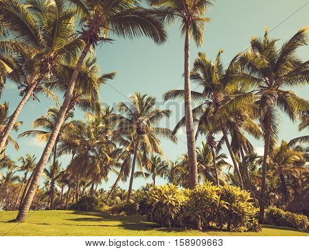 Palm Trees In Resort Garden, Retro Style