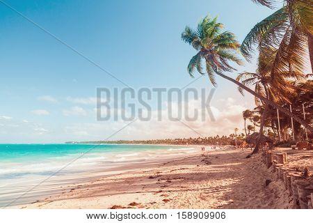 Palm Trees On Sandy Beach, Toned