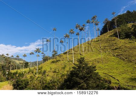 View of the Cocora Valley (Valle del Cocora) in Colombia South America