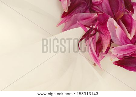 Close-up of pink peony petals on white tulle