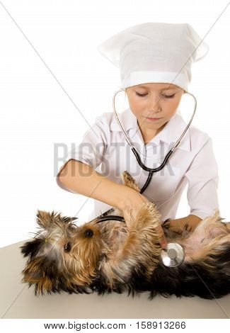 Little Girl playing veterinarian with her puppy.