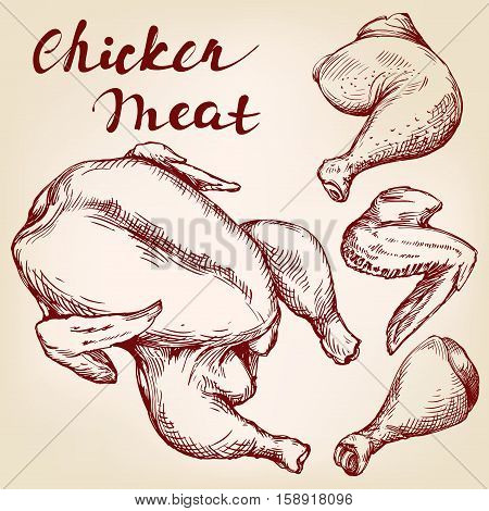 Chicken meat set vector llustration realistic sketch, the types of the body parts of the chicken , wings, ham,
