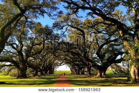 Oak Alley Plantation at New Orleans Louisiana
