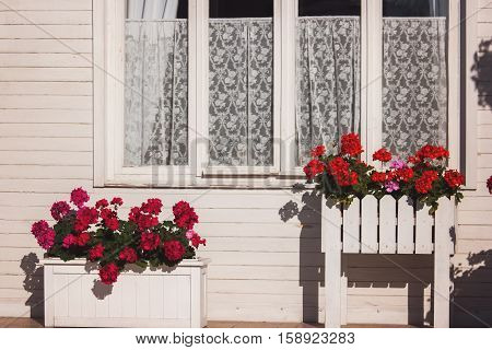 Flowers outside house window. White wooden house. Bright colored petunias. Plants need constant care.